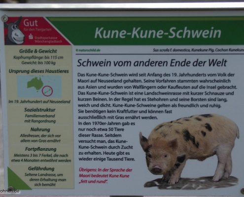 schild-kune-kune-schweine