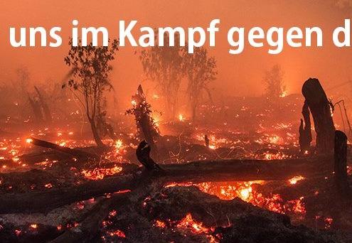 Der Regenwald brennt